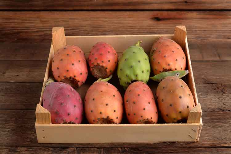 Nopal (prickly pear) is common fat blocking ingredient