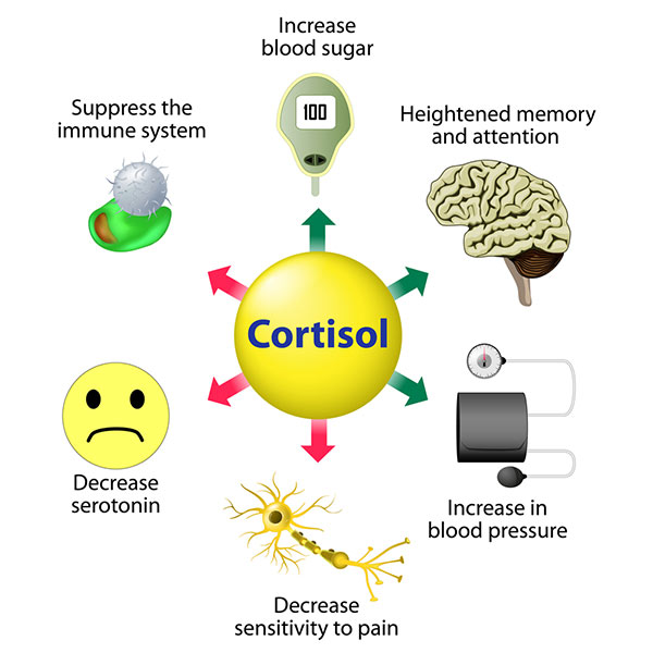 Cortisol is a stress hormone