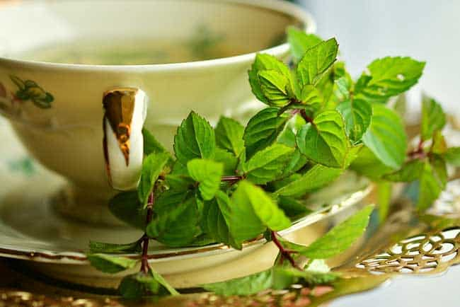 using Green Tea for weight loss