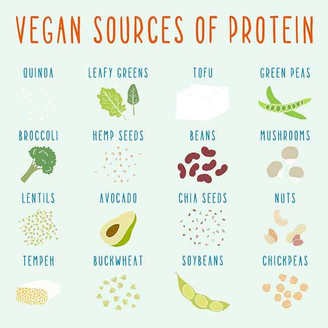 sources of protein for vegans